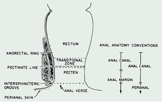 Anal Cancer Radiation Oncology